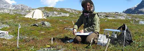 Samples of the volatiles are collected by placing a transparent chamber on top of a little area of tundra. Credit: Josephine Nymand