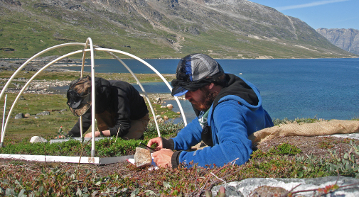 Researchers measuring on the tiny tundra plants. Credit: Magnus Kramshøj