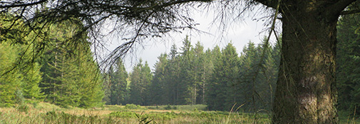 Section for forest, Nature and Biomass