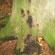 Læs mere om: Projekt om Phytophthora i danske skove
