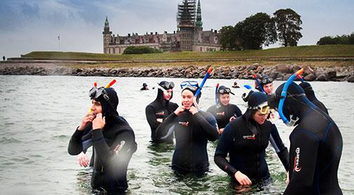 Snorklere ved Kronborg i Helsingør. Foto: Torben Åndahl. Klik på billedet for pressefoto.