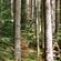Læs mere om: Mere skov gavner klimaet