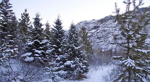 Det Grønlandske Arboret