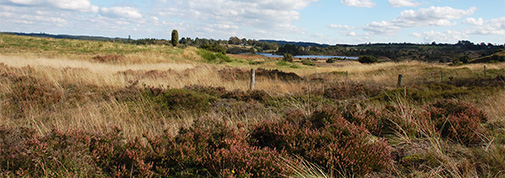 Heathland. Photo: Silkeborg Municipality
