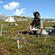 Read more about: Plantestoffer kan modvirke klimaændringerne i Arktis