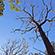 Læs mere om: Klimaændringer giver skader på egeskov