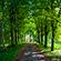 Læs mere om: Forskere vender fotosyntesen på hovedet de næste tre år