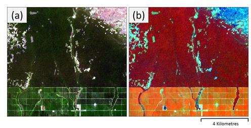 Gummiplantager ser grønne ud på satellitbilleder