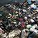 """Læs mere om: Studerende fra Københavns Universitet undersøger plastikforurening i Vietnams plastik """"Hotspot"""""""