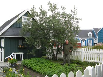 "Felt-leaf willow (Salix alaxensis), ""Kaneq"" in Erik Petersen's garden, planted 1995 - the proud owner in front."